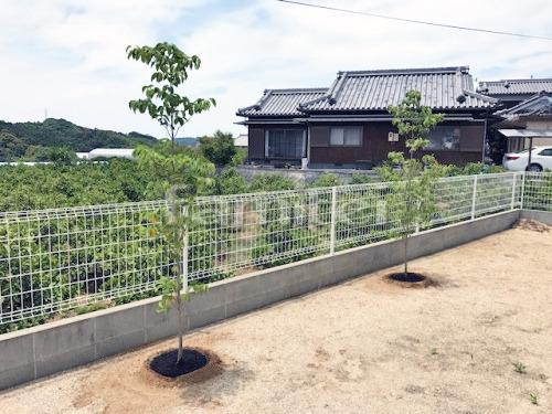 シンボルツリー ハナミズキ(白) 落葉樹 植栽