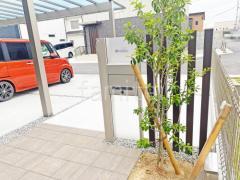 施工例画像:シンボルツリー ソヨゴ 常緑樹 株立 植栽