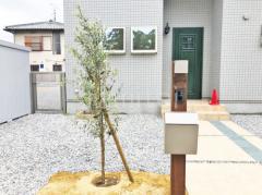 施工例画像:機能門柱 LIXILリクシル 木製調FW パターン2 シンボルツリー オリーブ 常緑樹 植栽