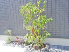 施工例画像:シンボルツリー ヤマボウシ 落葉樹 植栽 割栗石