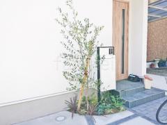 施工例画像:シンボルツリー オリーブ 常緑樹 植栽