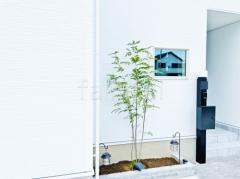 施工例画像:シンボルツリー シマトネリコ