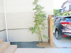 施工例画像:シンボルツリー イロハモミジ 落葉樹 植栽