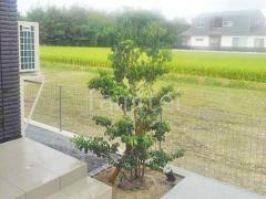 施工例画像:シンボルツリー